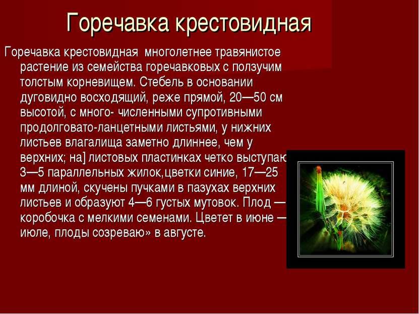 Горечавка крестовидная Горечавка крестовидная многолетнее травянистое растени...