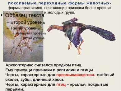 Ископаемые переходные формы животных- формы организмов, сочетающие признаки б...