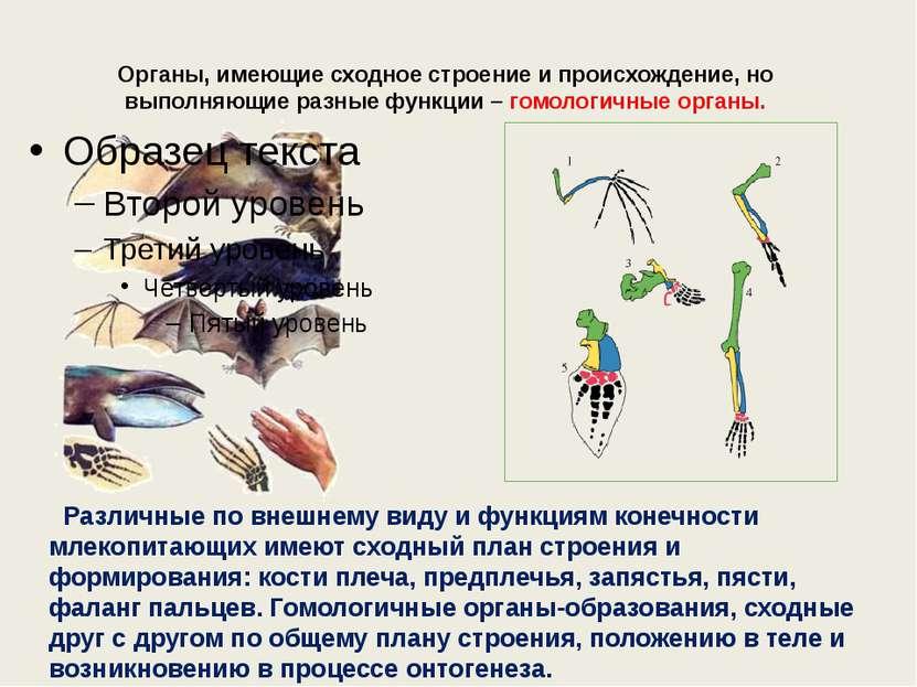 Органы, имеющие сходное строение и происхождение, но выполняющие разные функц...