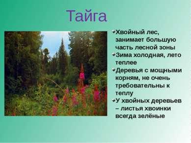 Хвойный лес, занимает большую часть лесной зоны Зима холодная, лето теплее Де...