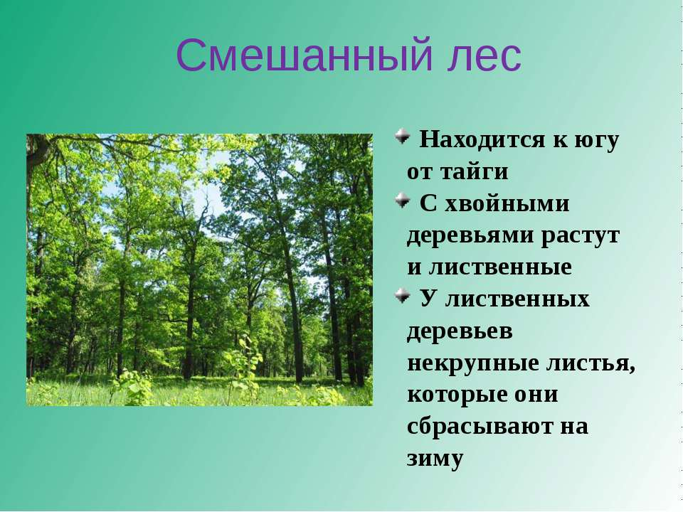 Находится к югу от тайги С хвойными деревьями растут и лиственные У лиственны...