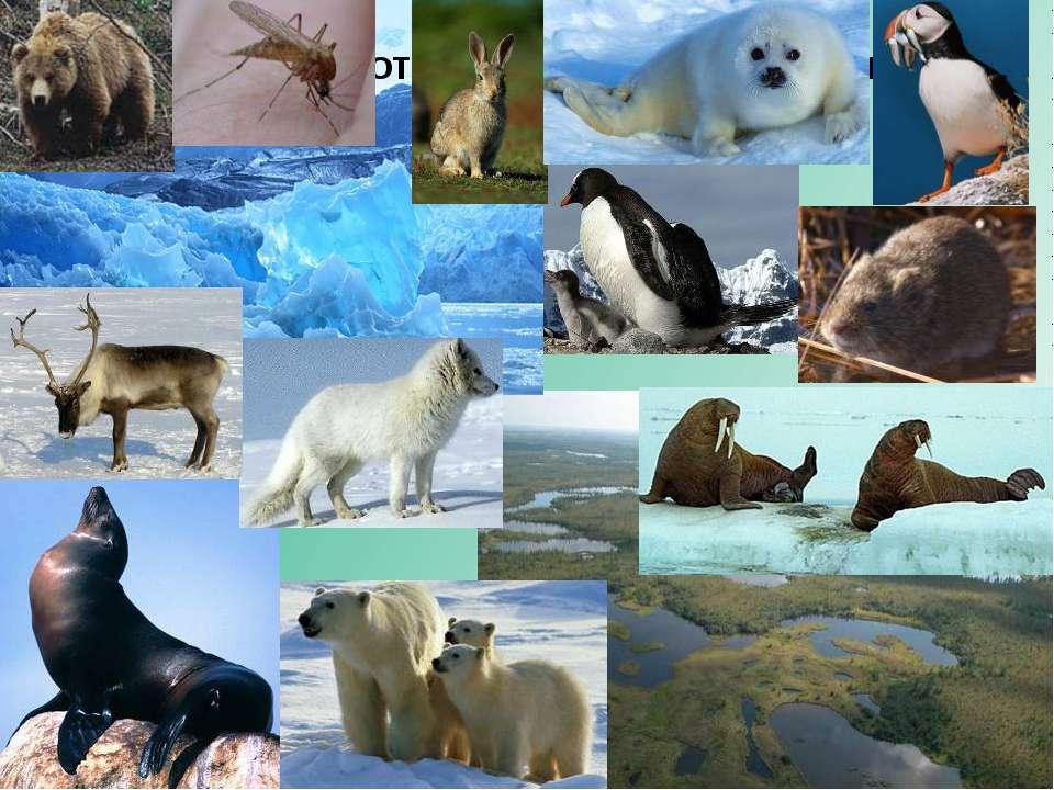 Расположите животных по местам их обитания