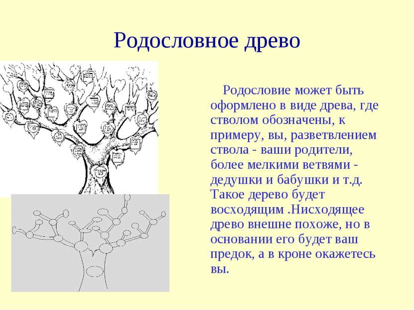 Родословное древо Родословие может быть оформлено в виде древа, где стволом о...