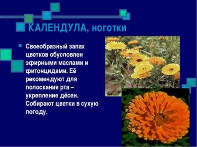 КАЛЕНДУЛА, ноготки Своеобразный запах цветков обусловлен эфирными маслами и ф...