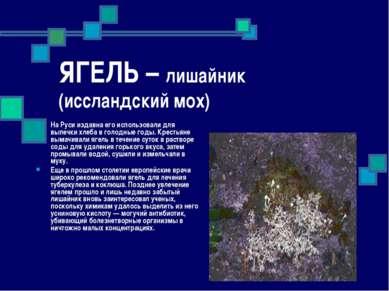 ЯГЕЛЬ – лишайник (иссландский мох) На Руси издавна его использовали для выпеч...