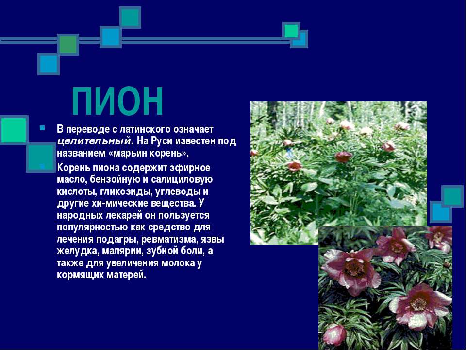 ПИОН В переводе с латинского означает целительный. На Руси известен под назва...