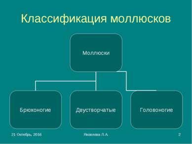 * Яковлева Л.А. * Классификация моллюсков Яковлева Л.А.