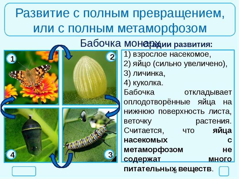 Развитие с полным превращением, или с полным метаморфозом Бабочка монарх Стад...