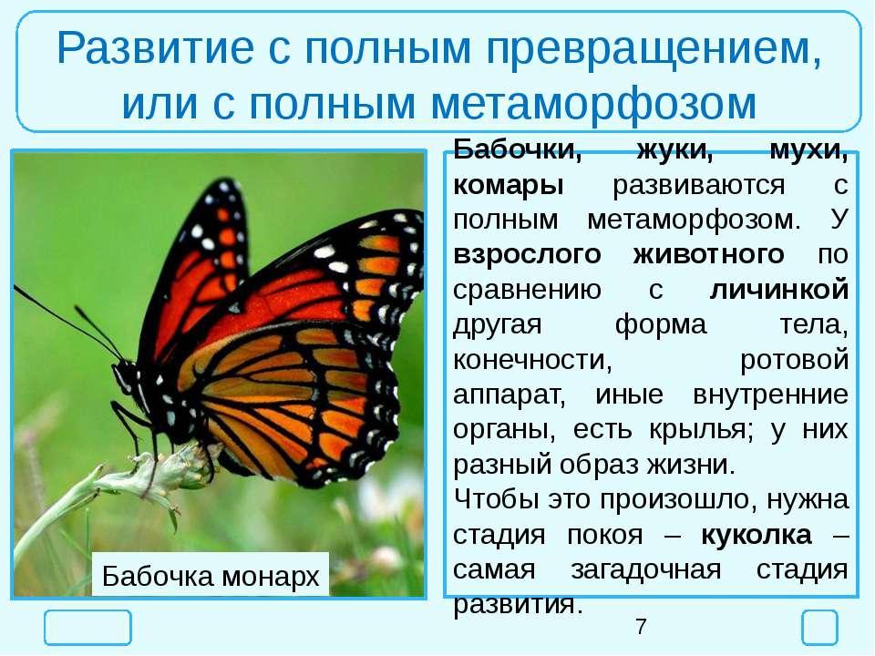Развитие с полным превращением, или с полным метаморфозом Бабочки, жуки, мухи...