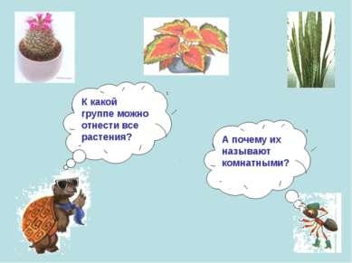 К какой группе можно отнести все растения? А почему их называют комнатными?