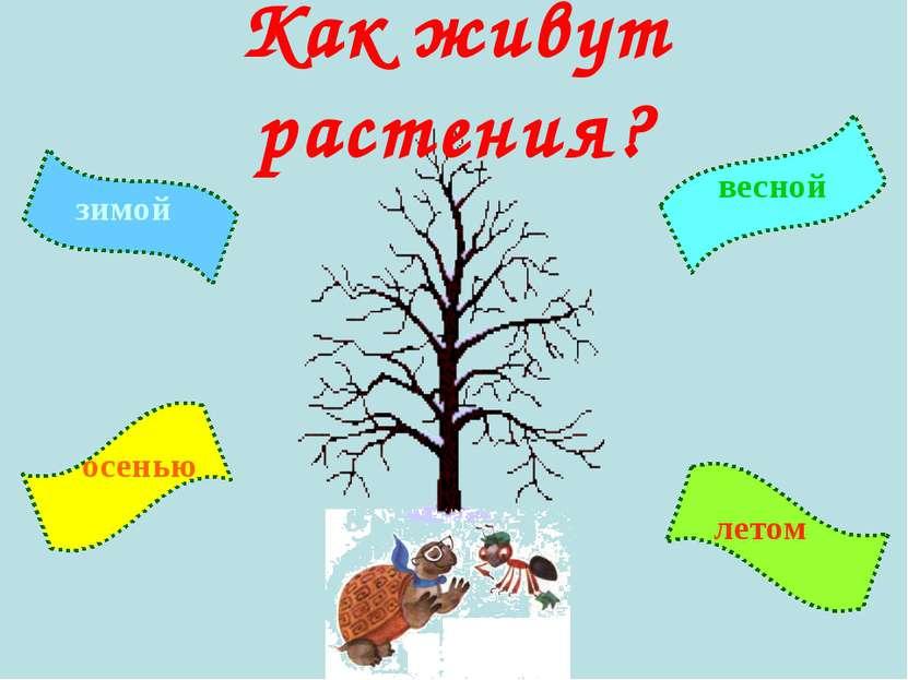 Как живут растения? зимой летом осенью весной