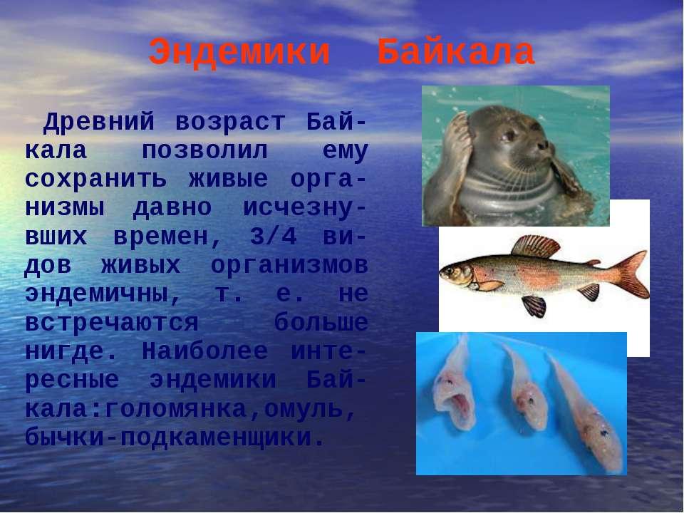 Эндемики Байкала Древний возраст Бай-кала позволил ему сохранить живые орга-н...