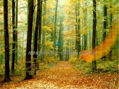 Лес – природное сообщество Окружающий мир Учитель Татаркина О.А . ОУ №3 2010г
