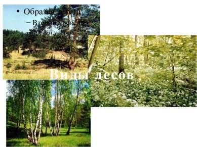 Виды лесов