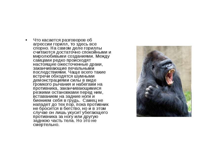 Что касается разговоров об агрессии горилл, то здесь все спорно. На самом дел...