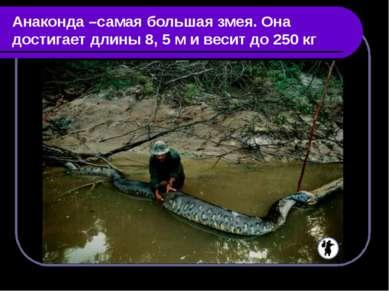 Анаконда –самая большая змея. Она достигает длины 8, 5 м и весит до 250 кг