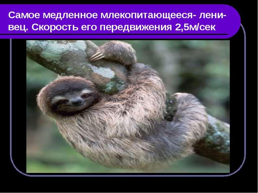 Самое медленное млекопитающееся- лени- вец. Скорость его передвижения 2,5м/сек