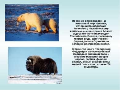 Не менее разнообразен и животный мир Чукотки, который принадлежит типичному «...