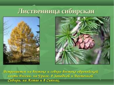 Лиственница сибирская Встречается на востоке и северо-востоке европейской час...