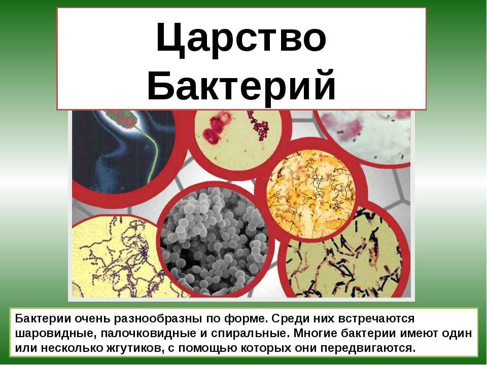 Царство Бактерий Бактерии очень разнообразны по форме. Среди них встречаются ...