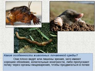 Какие особенности животных почвенной среды? Они плохо видят или лишены зрения...
