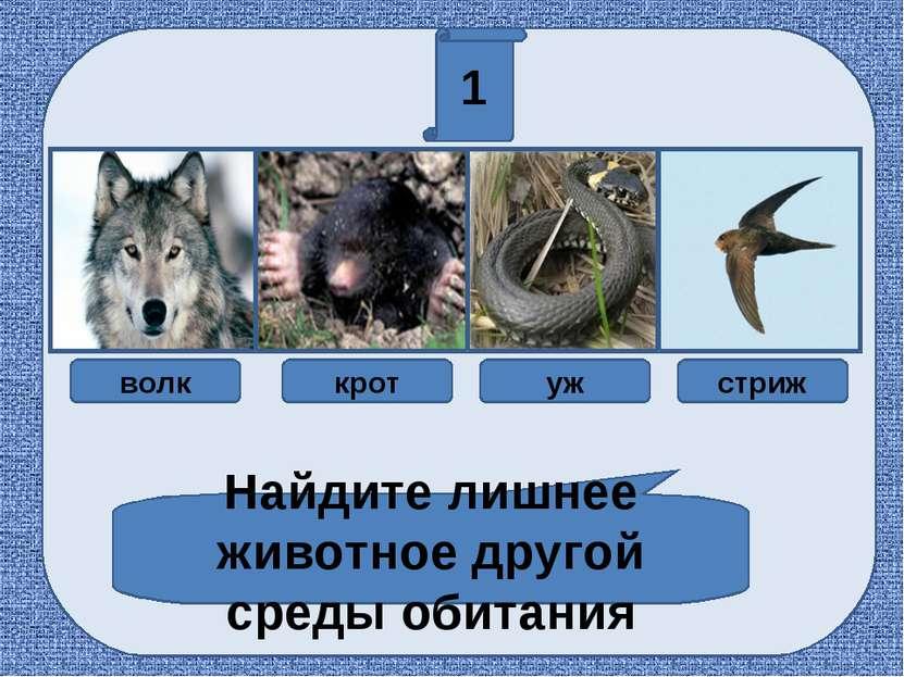 1 Найдите лишнее животное другой среды обитания волк крот уж стриж