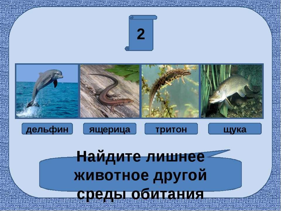 2 Найдите лишнее животное другой среды обитания дельфин ящерица тритон щука