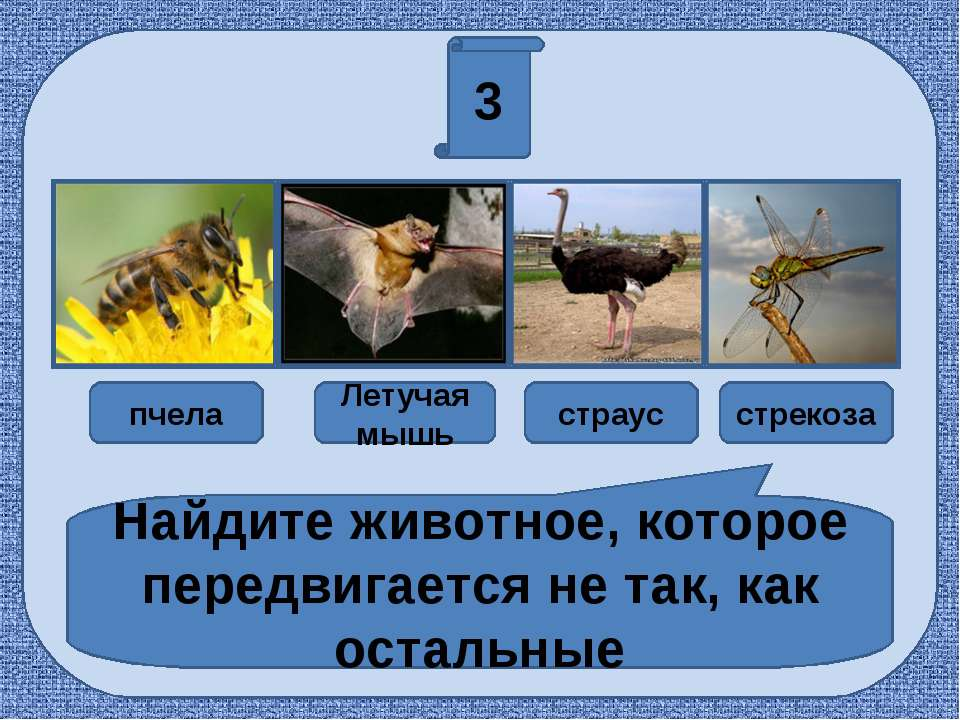 3 пчела Летучая мышь страус стрекоза Найдите животное, которое передвигается ...