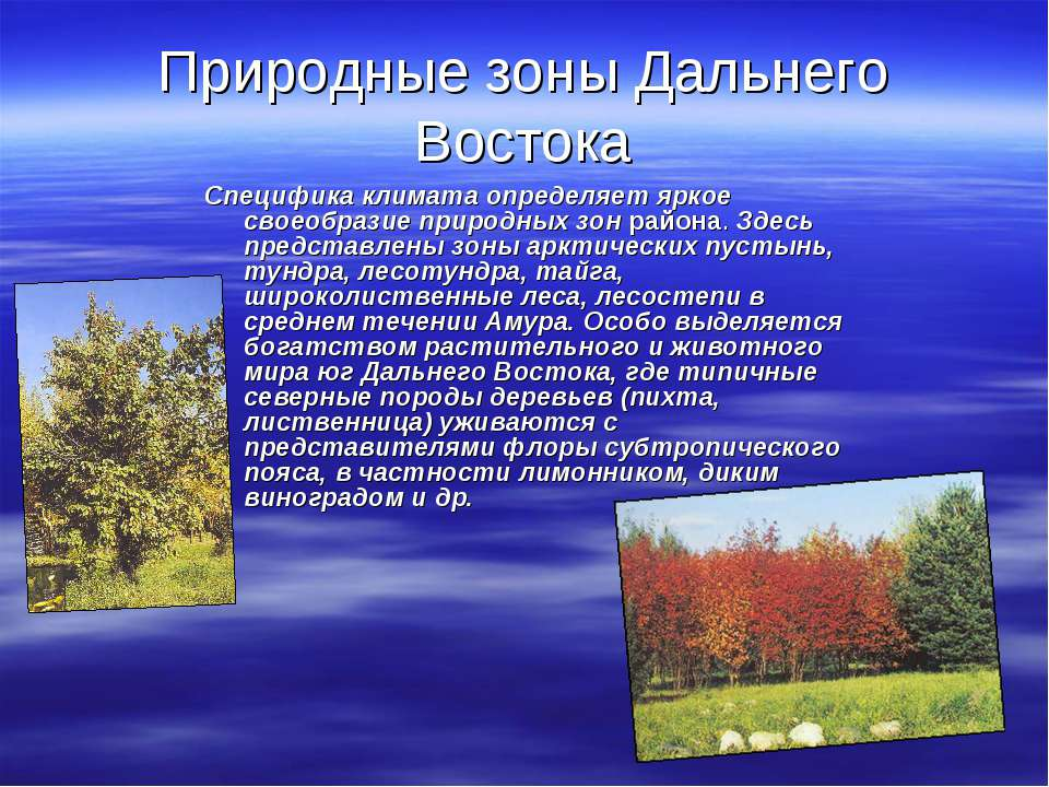 Природные зоны Дальнего Востока Специфика климата определяет яркое своеобрази...