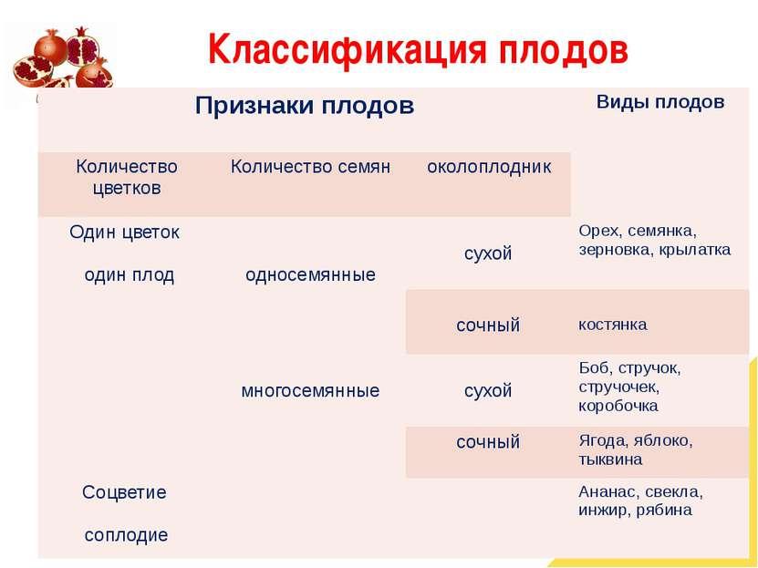 Классификация плодов Признаки плодов Виды плодов Количество цветков Количеств...