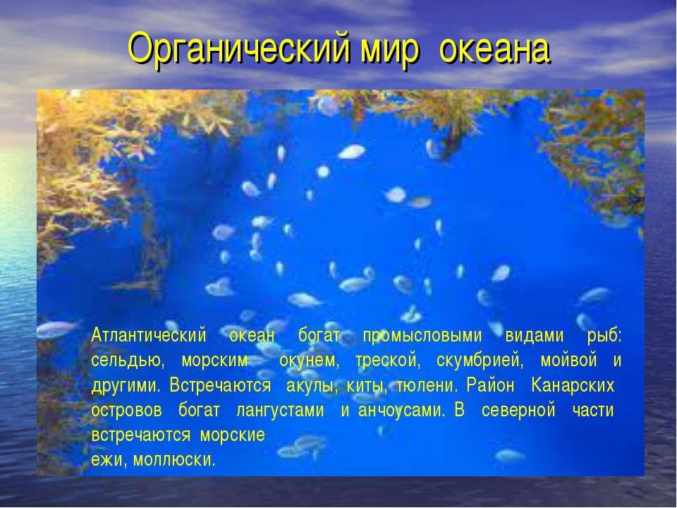 Органический мир океана Атлантический океан богат промысловыми видами рыб: се...