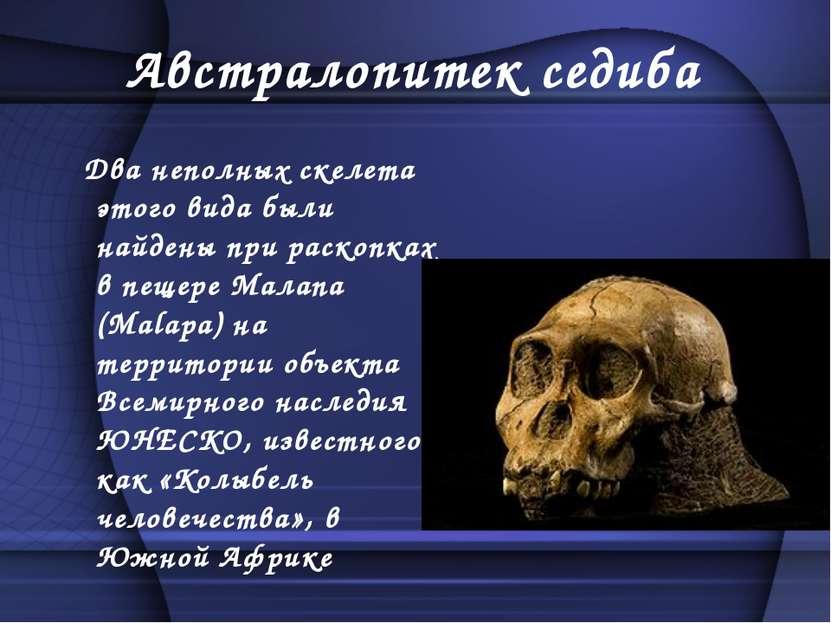 Австралопитек седиба Два неполных скелета этого вида были найдены при раскопк...