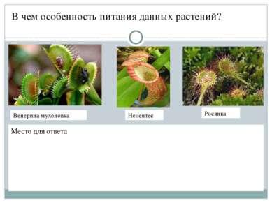 В чем особенность питания данных растений? Место для ответа Венерина мухоловк...