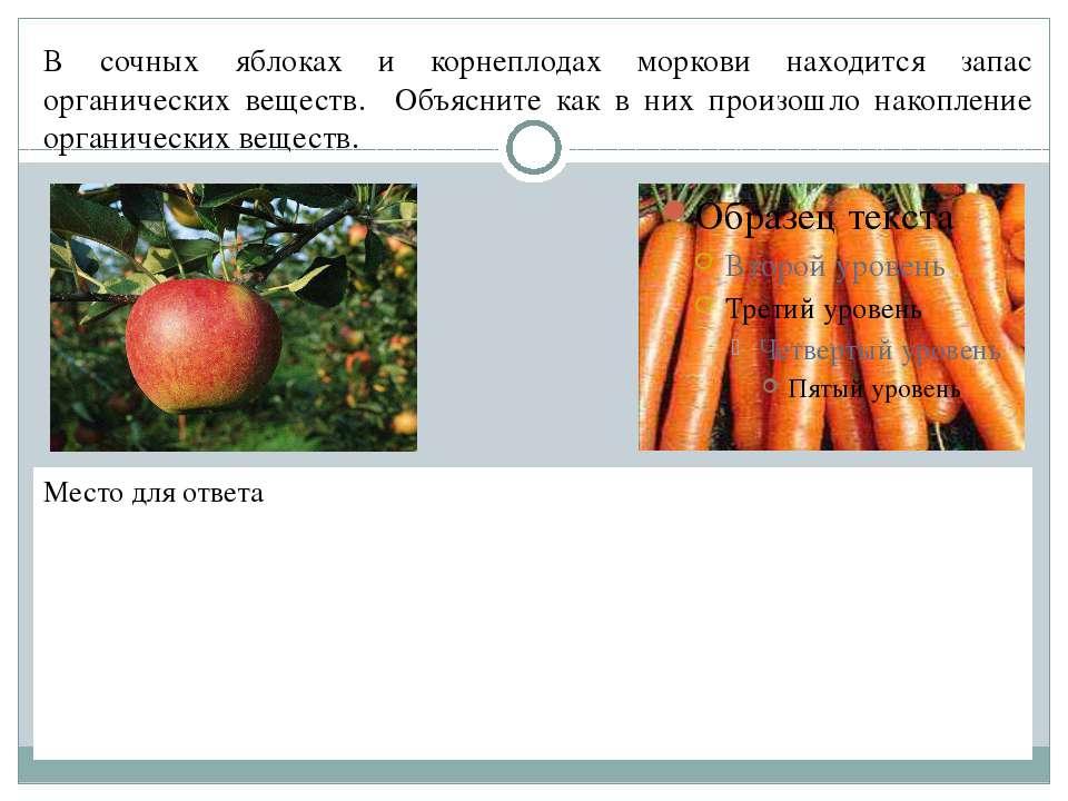 В сочных яблоках и корнеплодах моркови находится запас органических веществ. ...