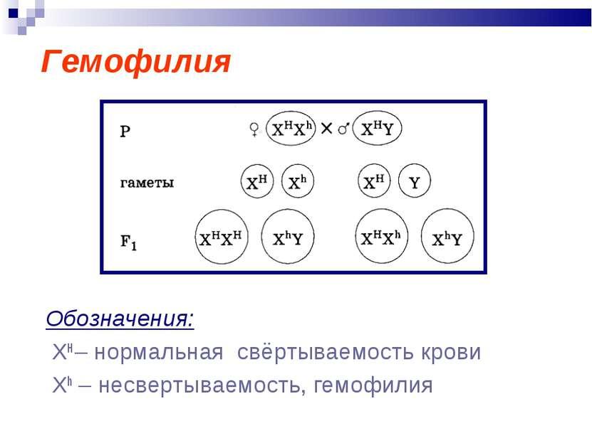 Гемофилия Обозначения: ХН – нормальная свёртываемость крови Xh – несвертываем...