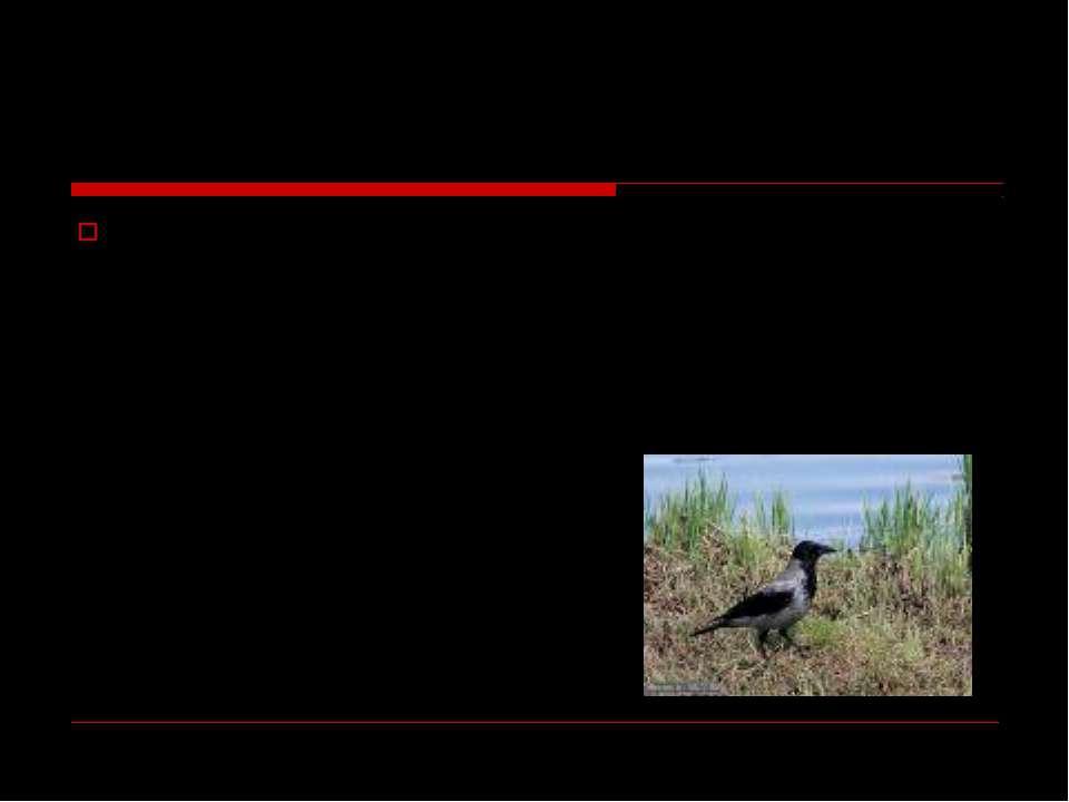 Загадка Носит серенький жилет, Но у крыльев черный цвет. Видишь, кружат двадц...