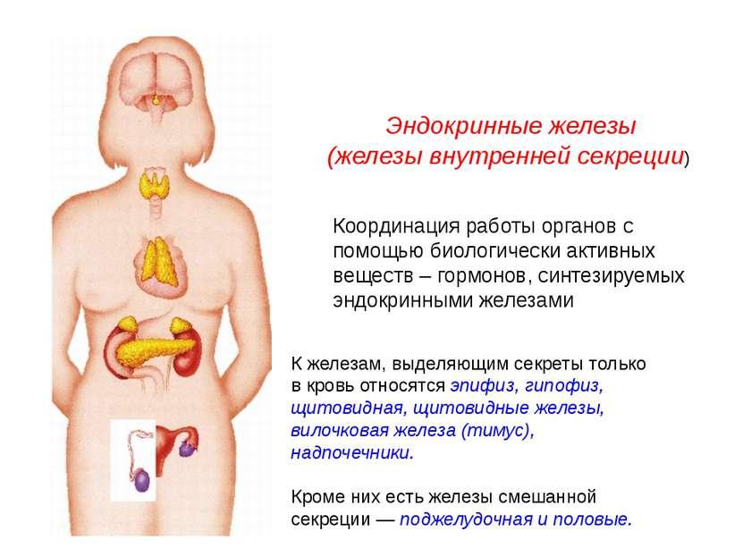 Эндокринные железы (железы внутренней секреции) К железам, выделяющим секреты...