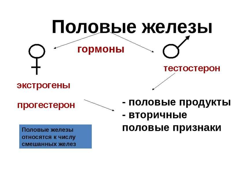 Половые железы гормоны экстрогены прогестерон тестостерон - половые продукты ...