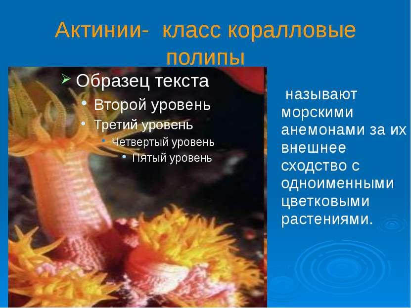 Актинии- класс коралловые полипы называют морскими анемонами за их внешнее сх...