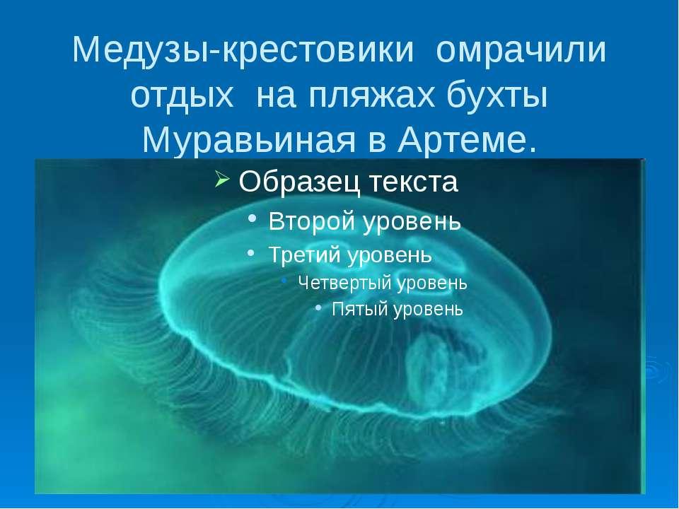 Медузы-крестовики омрачили отдых на пляжах бухты Муравьиная в Артеме.
