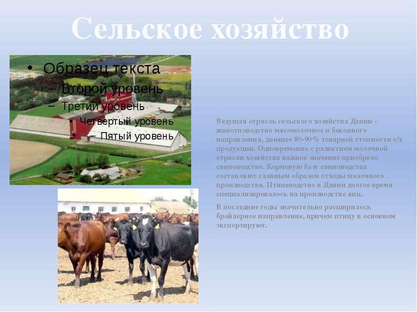 Сельское хозяйство Ведущая отрасль сельского хозяйства Дании - животноводство...
