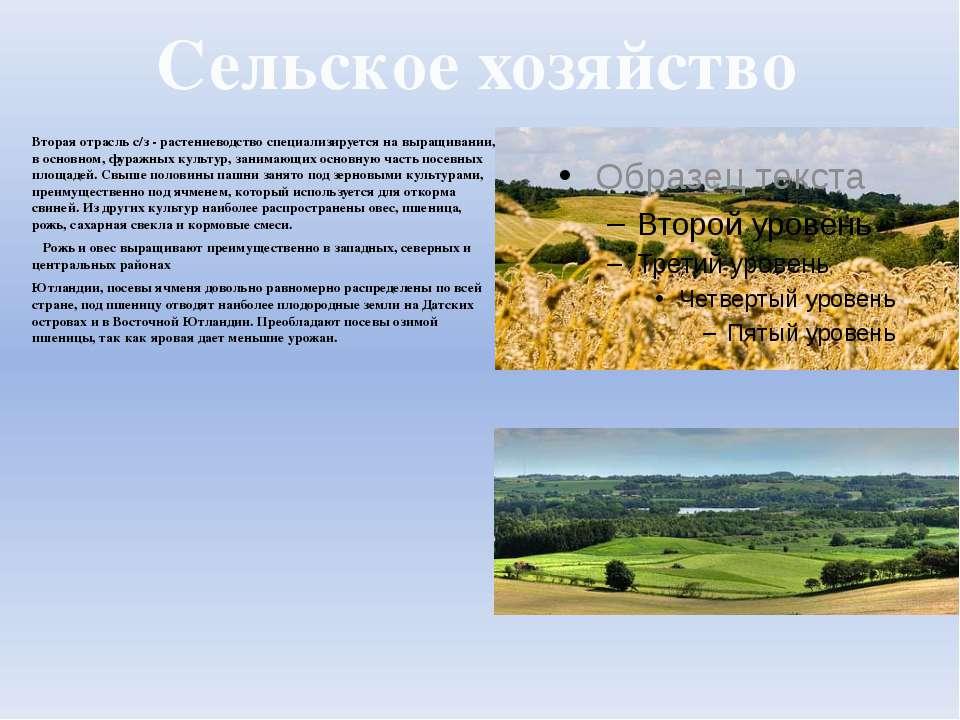 Сельское хозяйство Вторая отрасль с/з - растениеводство специализируется на в...