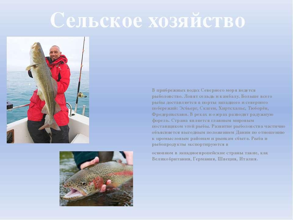 Сельское хозяйство В прибрежных водах Северного моря ведется рыболовство. Лов...