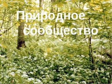 Природное сообщество Природное сообщество