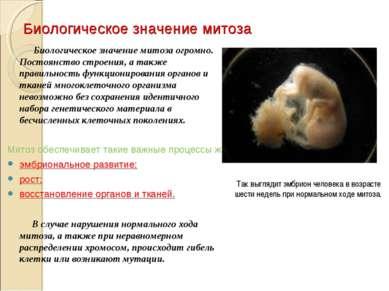 Биологическое значение митоза Биологическое значение митоза огромно. Постоянс...