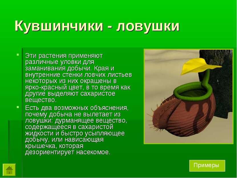 Кувшинчики - ловушки Эти растения применяют различные уловки для заманивания ...