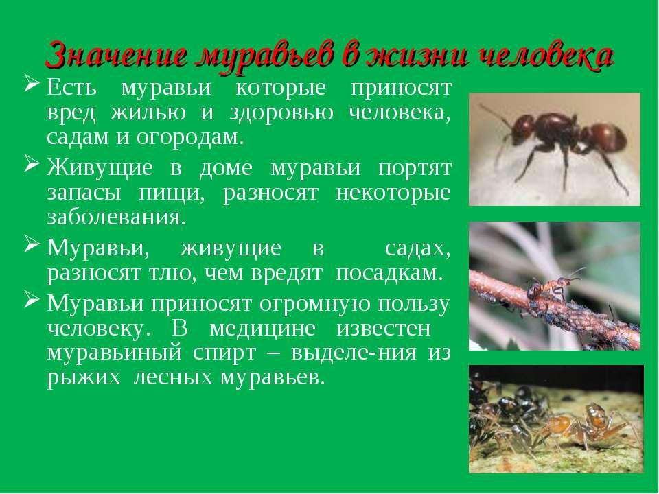 Что такое лет муравьев