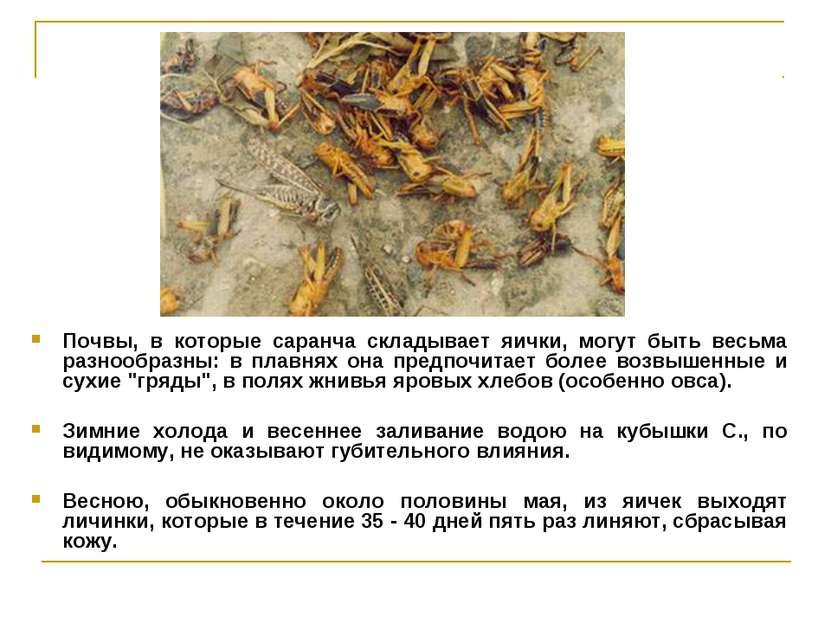 Почвы, в которые саранча складывает яички, могут быть весьма разнообразны: в ...
