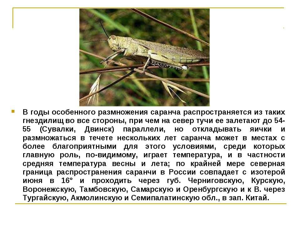 В годы особенного размножения саранча распространяется из таких гнездилищ во ...