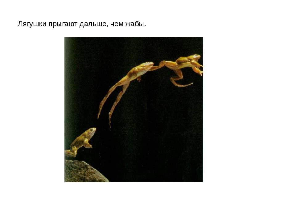 Лягушки прыгают дальше, чем жабы.